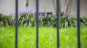 The Shawmut: Pet Friendly: DC Apartments: Curb Appeal