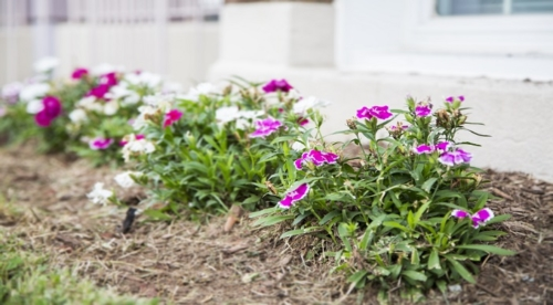 DC Apartments for Rent Landscaping