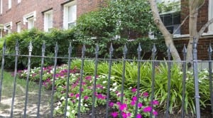 Hampton Courts: DC Apartments:Flowers